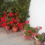 Flower Pots outside the room