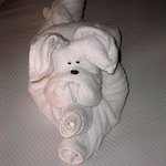 Towel animal left by housekeeping