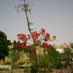 Photo of Siwa Shali Resort