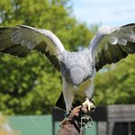 Yaraks Birds Of Prey Falconry Centre
