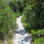 Hiking trail in the dunes.