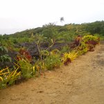 Colourful plants growing in the lava
