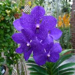 Rare orchid not for sale