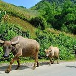 ha giang tours with hanoi aurora hotel