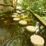 Koi carp stepping stones