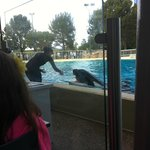Trainer with Shamu at Dining with Shamu dinner