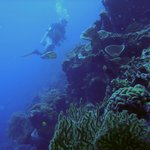 Neptune Diving Adventure Moalboal & Santander