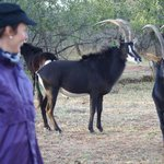 Thaba Khaya Lodge, Sable Ranchの写真
