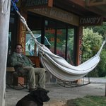 Comfy hammocks and resident pooch