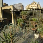 """Rooftop """"Garden"""" terrace..looks like they haven't watered in awhile!"""