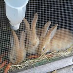 bunnies in their hutches