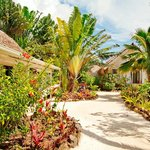 Sandy pathways separate premium garden suites