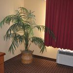 Φωτογραφία: BEST WESTERN Mayport Inn & Suites