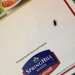 SpringHill Suites by Marriott resmi