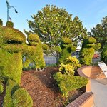 Topiary Gardens Next to Swimming Pool