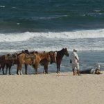 Horses to ride on the beach in front of the hotel