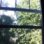 Room 106 view: lush woods and wetland beyond, many birds, you forget the parkway