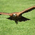 Hawk Conservancy