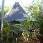 Our bush bungalow