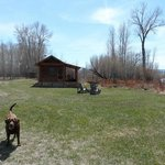 Little cabin by the river (and a lodge dog out to play)