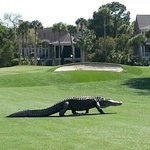 5th hole at Osprey. Just playing thru..