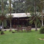 Lync-Haven Rainforest Retreat, Cabins, Camping & Wildlife Experience의 사진