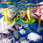 Snorkel Tours and Gear Rental