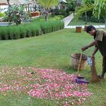 cleaning up bouganvillia petals next day after wedding