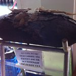 unexploded WWII bomb in the dive shop