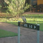 Bird at Lodge