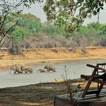View of the Luangwa from the room