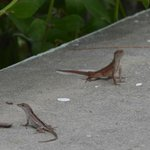 Lizards galore!