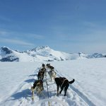 Dogsledding in Alaska!!