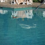 Even the duck liked the pool