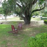 Seating outside by giant oak tree