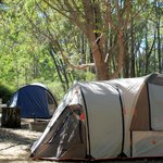 Beautiful bush camp sites