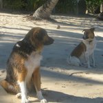 The Rarotonga Hitchhikers - Rusty and Bella (we called her Bella)