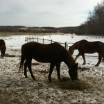 Horses at Mountain Horse Farm!
