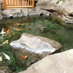 Koi pond inside hotel