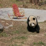 Panda on the playground
