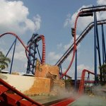 Sheikra at Busch Gardens