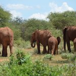Marco Polo Safaris Day Tours