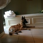 Our Belgian Malinois in front of the jacuzzi
