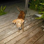 Our little manky dog that we fed each night on our patio