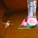 Love the humming birds.......and boy,they do hum !!!!!Like minature planes