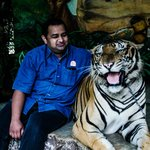 Life with tigers... never thought to be such close!