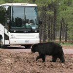 Arizona Grand Canyon Tours - Private Day Tour