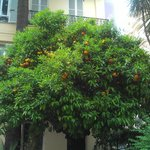 Front of hotel - Orange tree