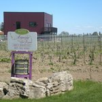 View of Sign, winery building and vines.