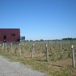 View of winery building and vines.